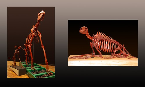 CHALICOTHERIUM LAURENTIAN FAMILY by michael bahl